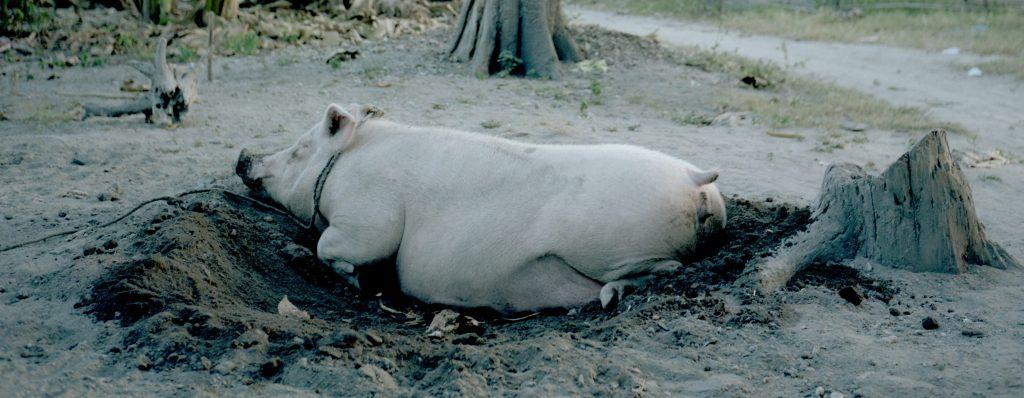 Das Pork Barrel-System der Philippinen