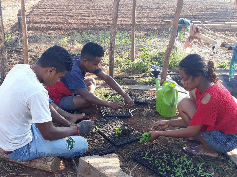 Timor-Leste – ökologischer Landbau im Irgendwo