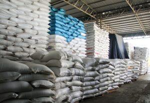 Bio-Reis aus Kambodscha: Eine Perspektive für Bäuer*innen?