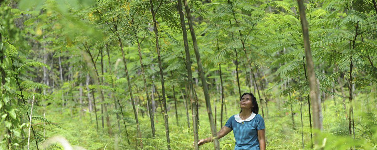Einjährige Sengon-Bäume in Indonesien © Christof Krackhardt