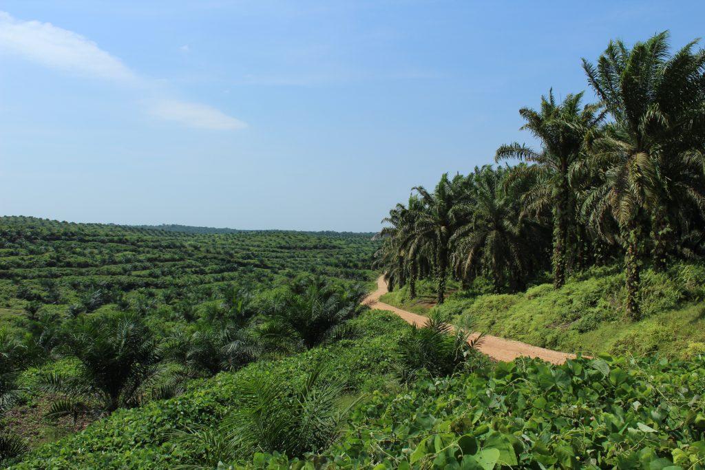 Palmöl - Imke Rödel