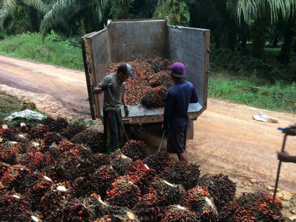 Imke Rödel  - Indonesien Palmöl