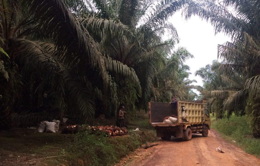 Palmölsiegel: Beweise für Nachhaltigkeit?