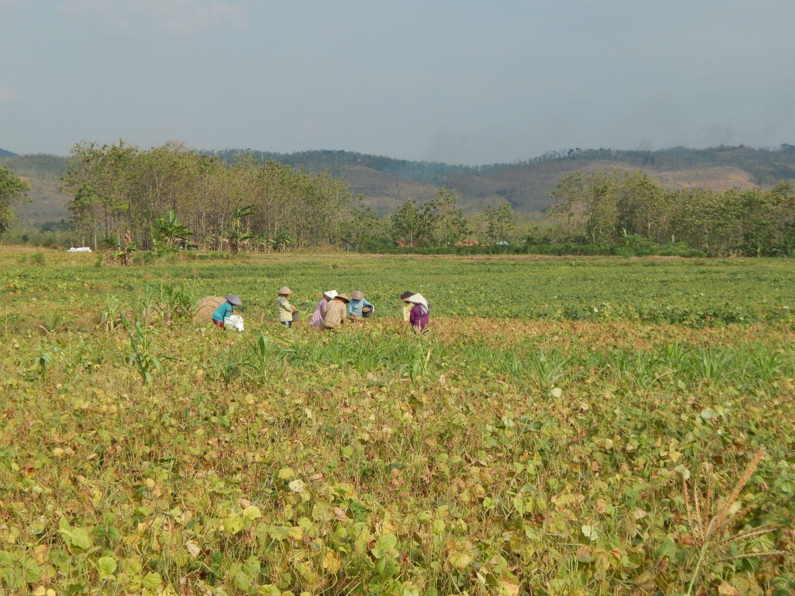Landarbeiter*innen am Fuß des Kendeng-Gebirges © Save Kendeng