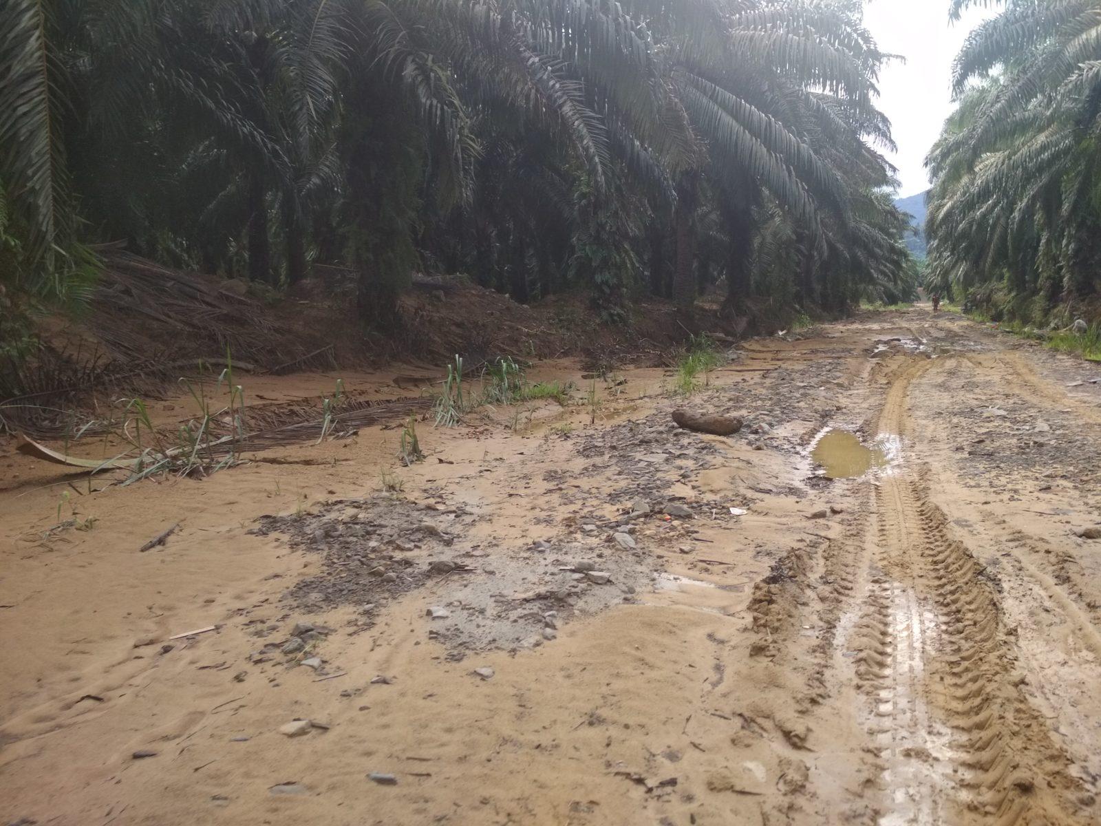 Der Zugang zu den Plantagen wird durch den schlechten Zustand der Straßen erschwert © Rizal Assalam