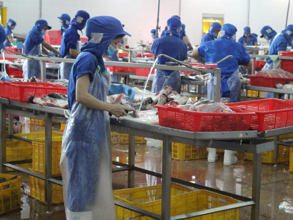 Arbeiter*innen in einer Fischfabrik im Süden Vietnams © Marina Kamberovic, 2018