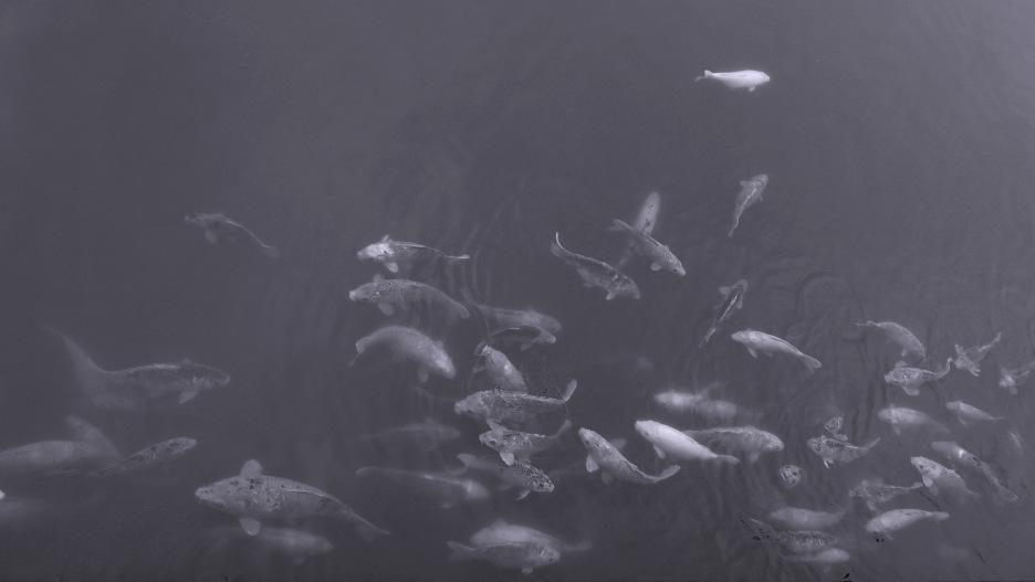 Fische © Anne-Clara Köhler/CC Lizenz BY-NC-ND