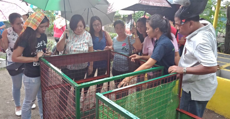Box-Kompostierung in Tacloban City © Mother Earth Foundation
