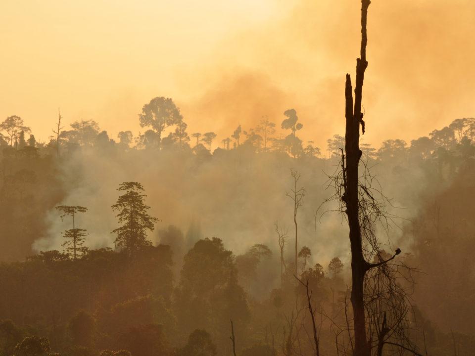Südostasien Interviews Klimawandel
