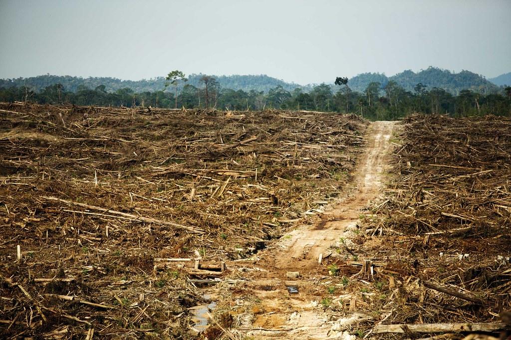 Indonesien Kahlschlag Regenwald