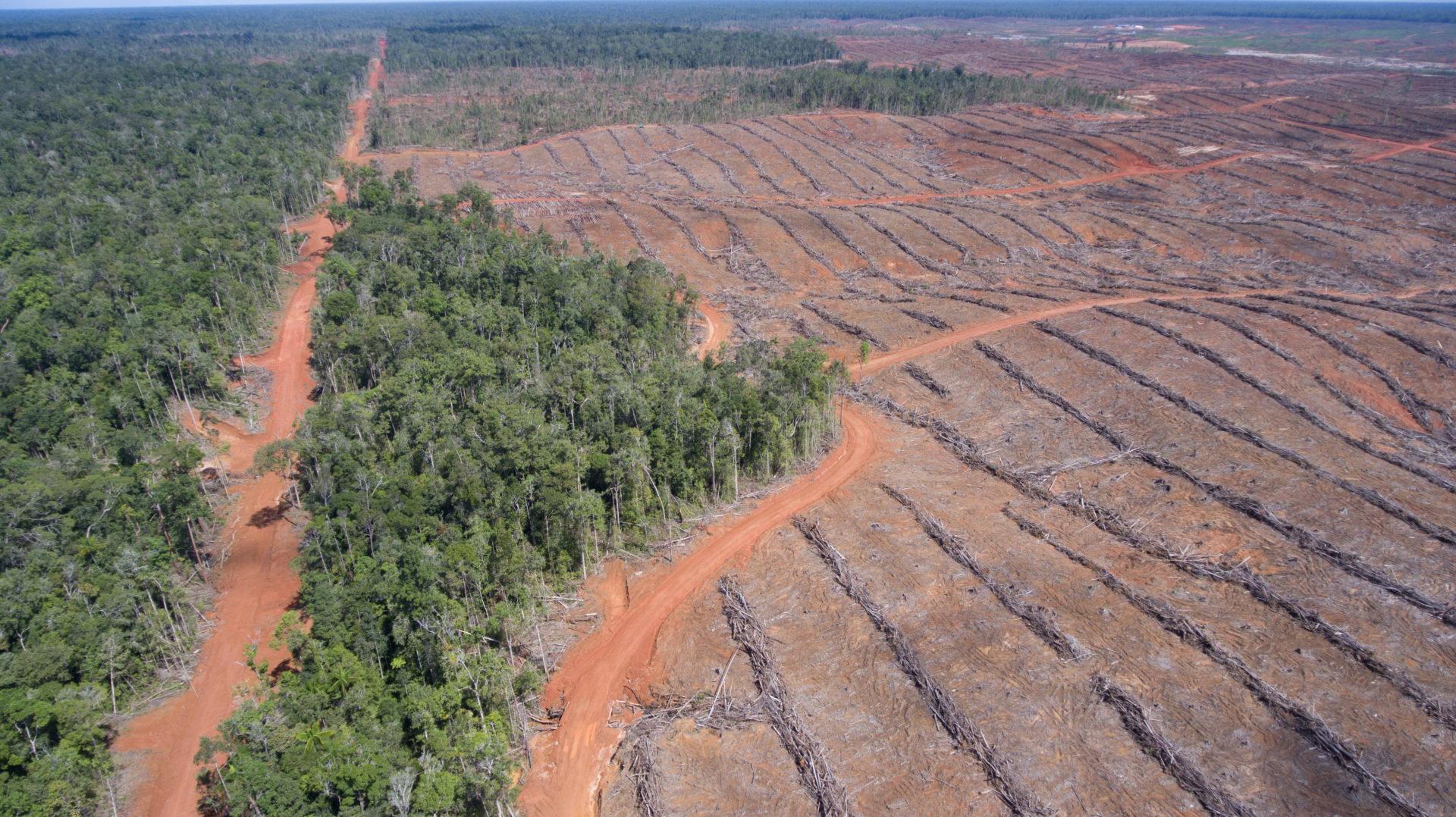Profit geht vor Umweltschutz (Teil II)