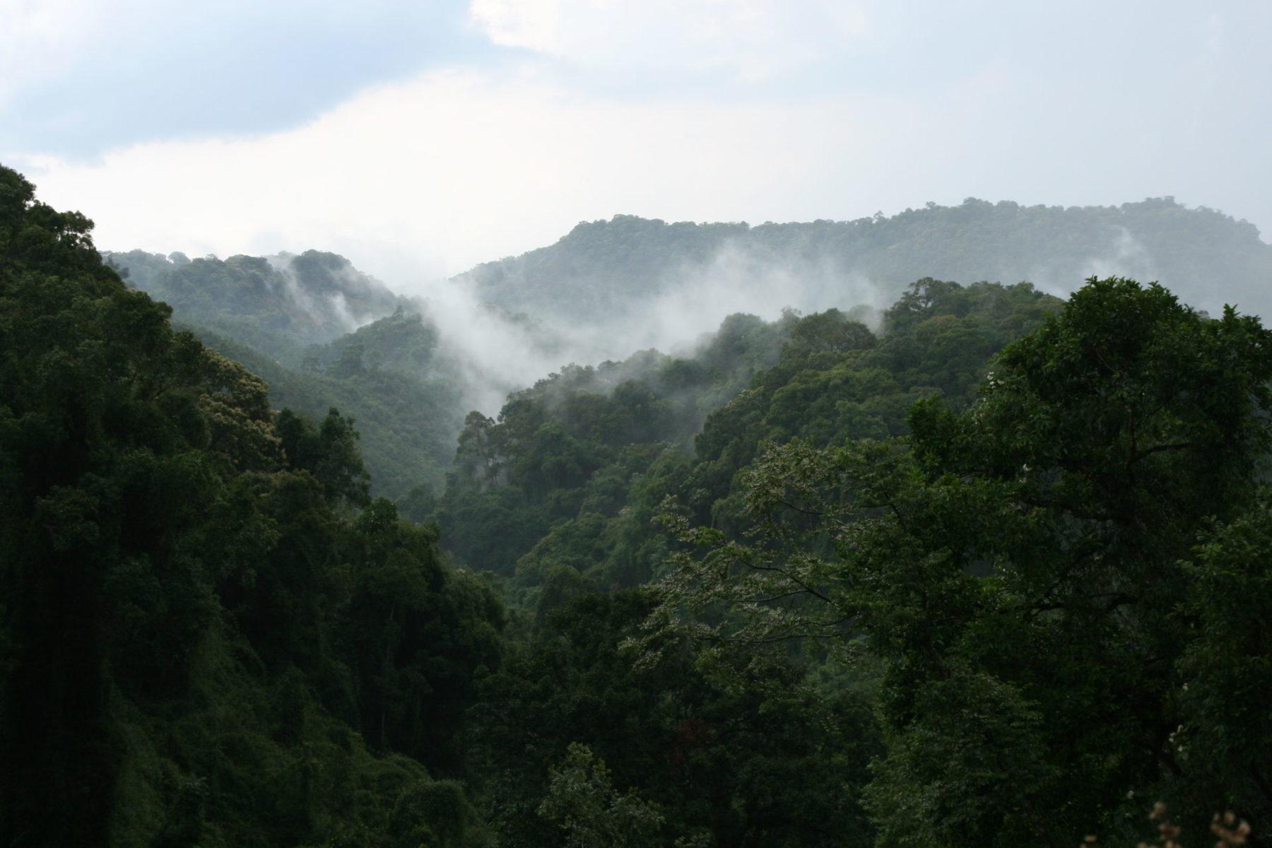 Laos Waldschutz Klimaziel