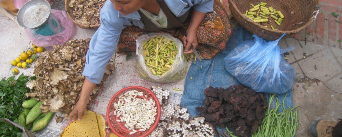 Insekten gegen den Welthunger?