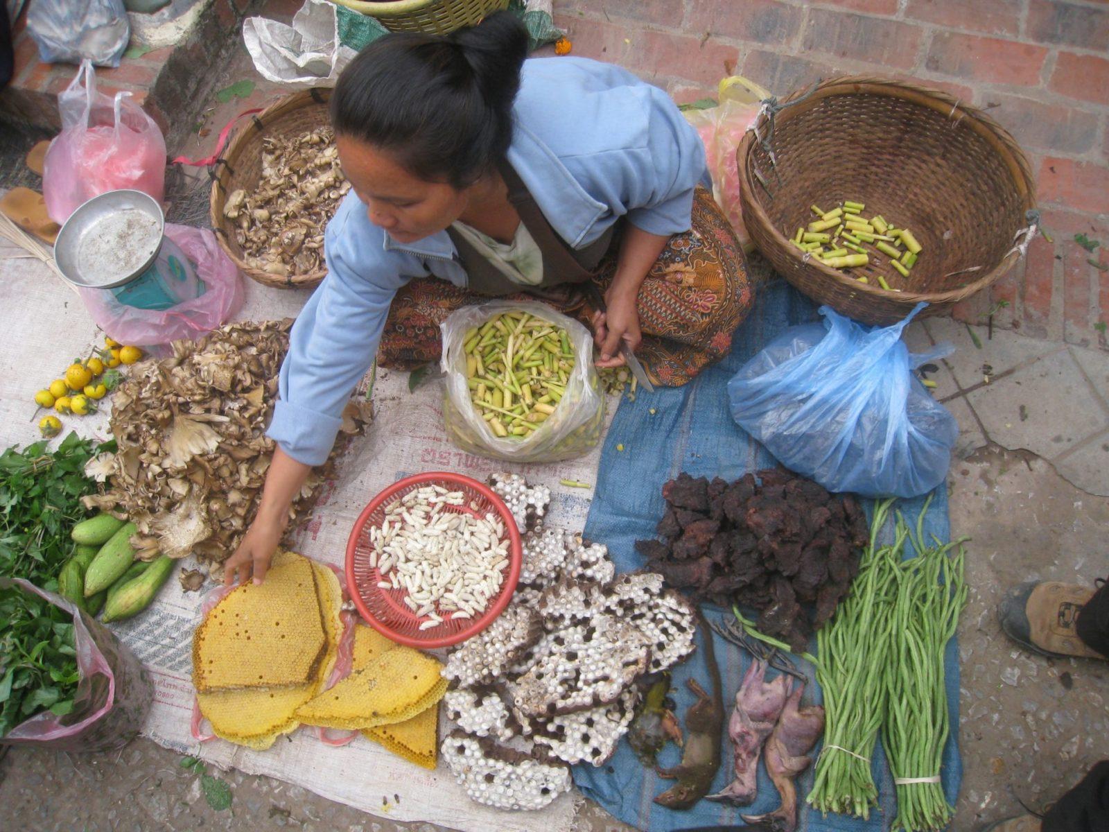 Thailand Insekten Welthunger