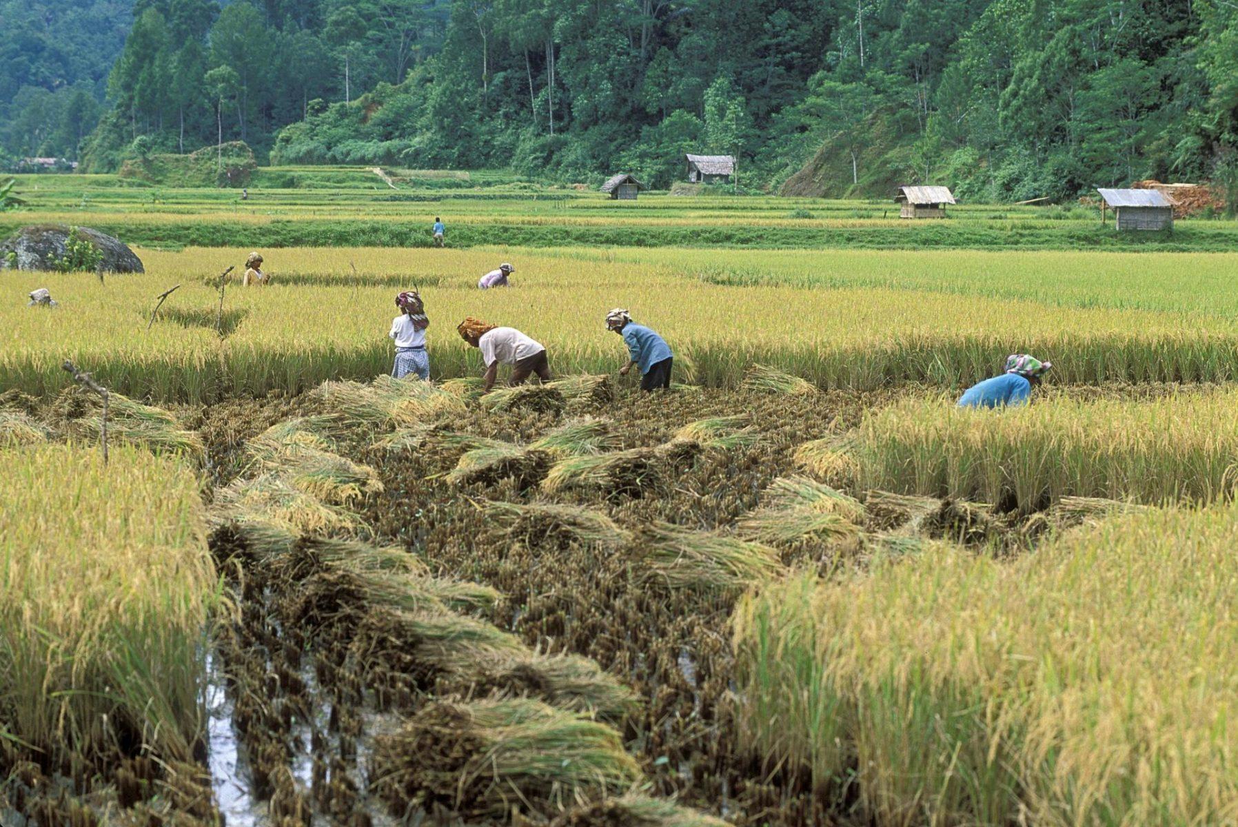 Indonesien Agro-Nationalismus COVID-19