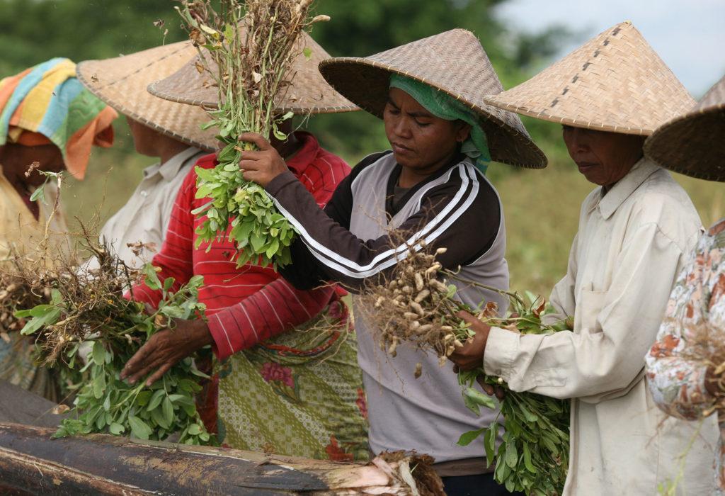 Indonesien Ernährungssicherheit