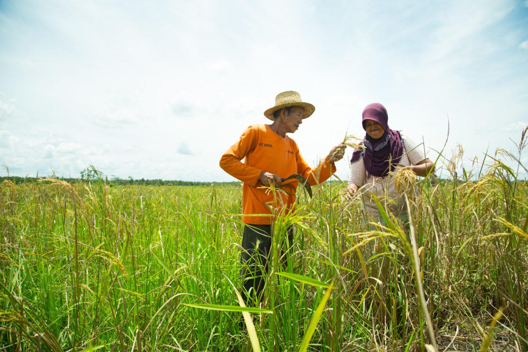 Indonesien Ernährungssicherheit Regierung