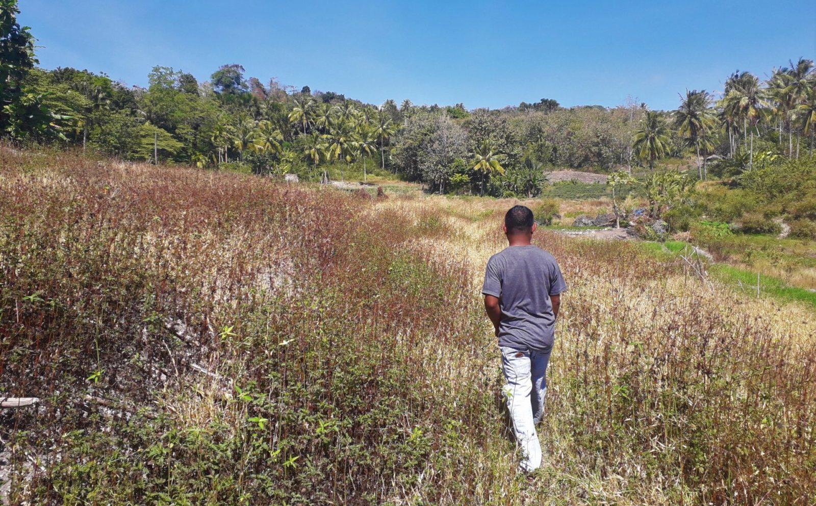 Indonesien Agroforstwirtschaft Mamar