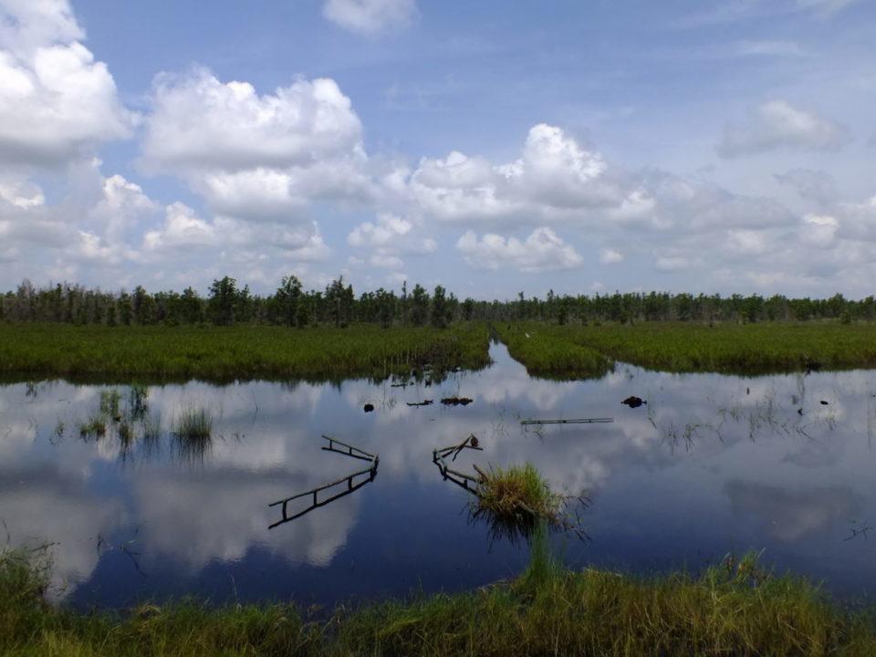 Indonesien Reis Ernährungssicherheit