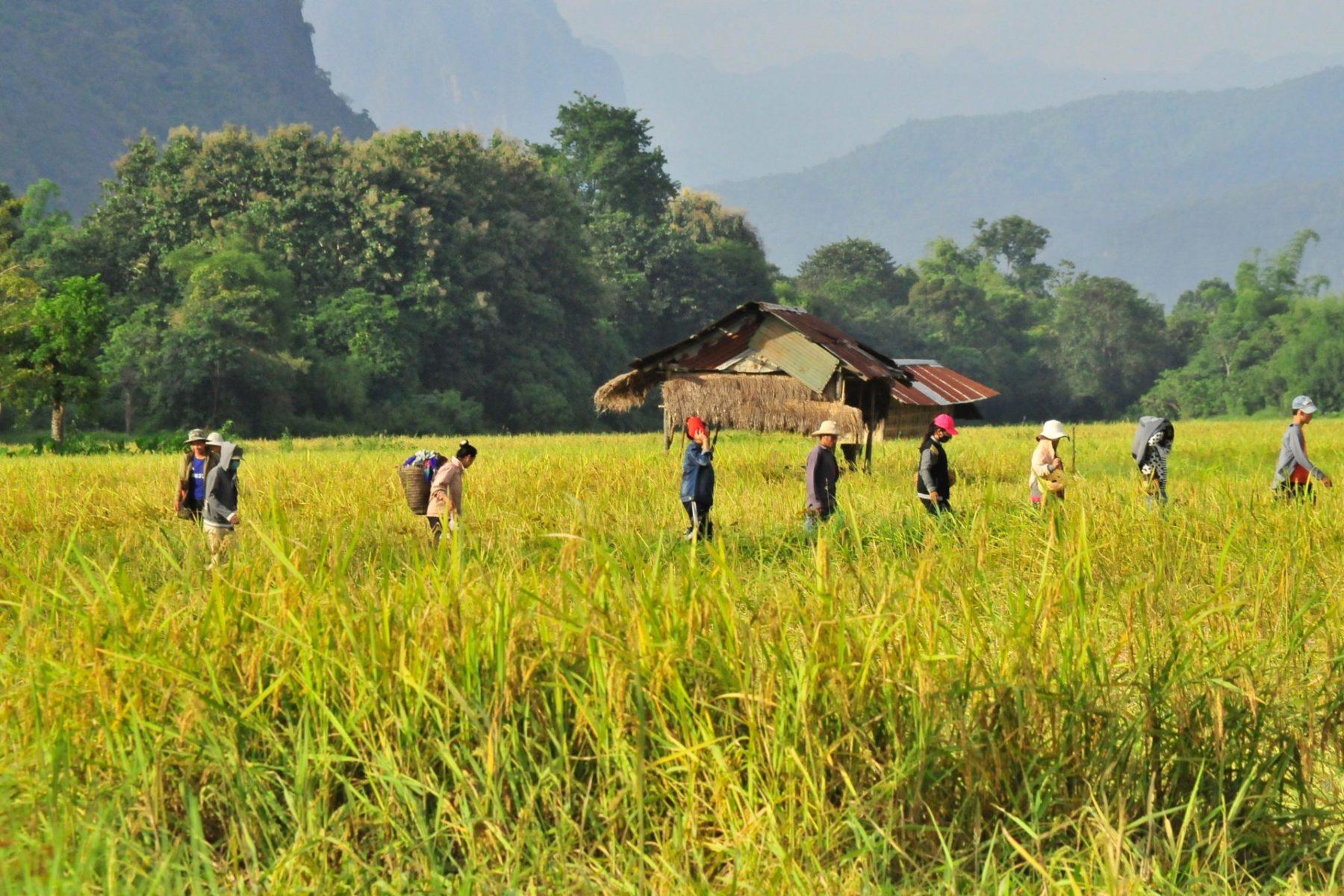 Landgrabbing in Laos – Entwicklung für wen?