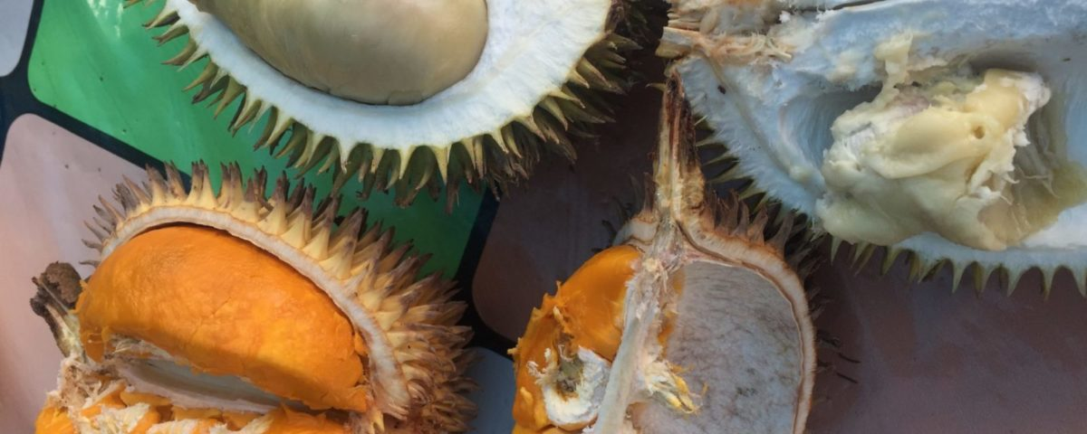 Durian und die Kolonialität der Macht (Teil I)
